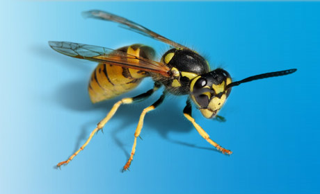 Insect removal in Leeds